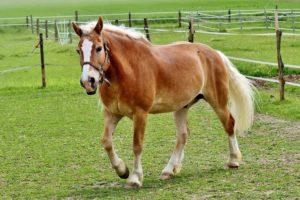 horse breeds quiz