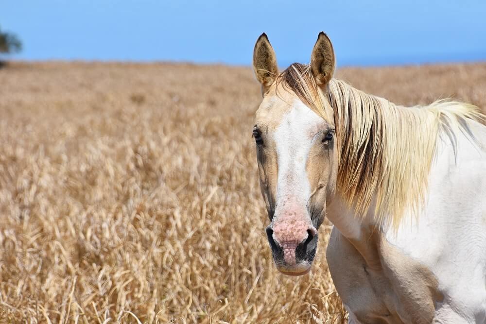 horses can recognize images in photographs