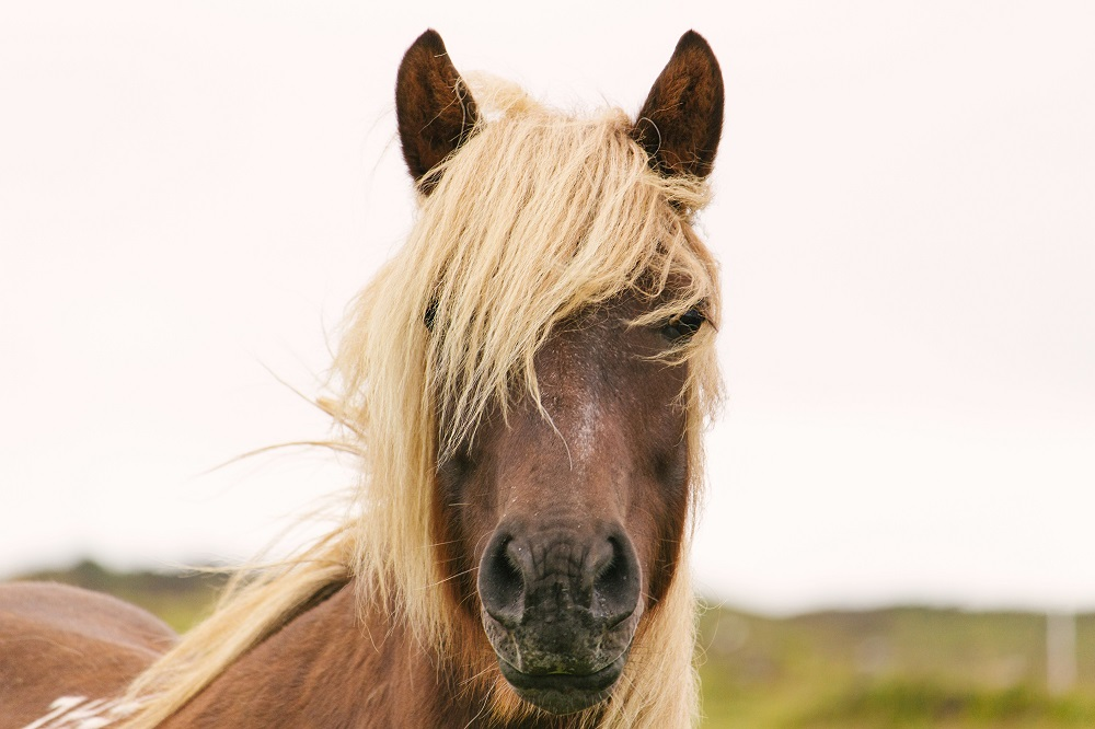 do horses have big brains
