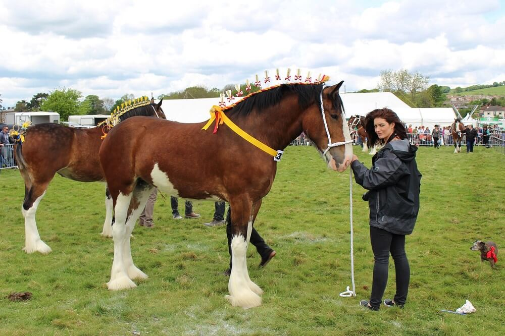 shire horse is expensive