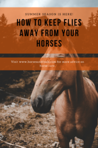 how to keep flies off horses