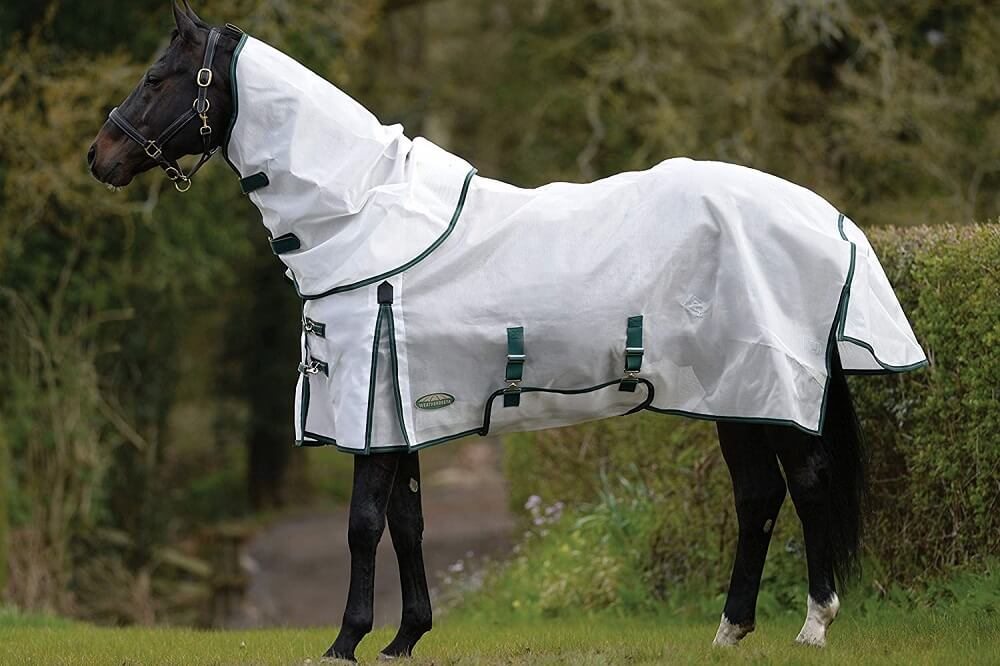 best fly sheet for horses reviews