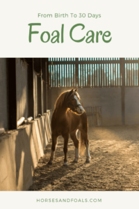 foal care during the first month