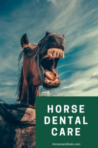 basic horse dental care