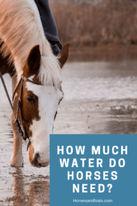 how much water does a horse drink a day