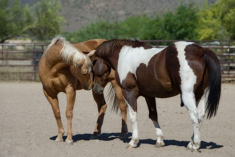 horse companionship