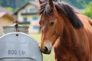 keep your horse well-hydrated