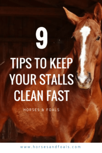 how to clean a horse stall fast