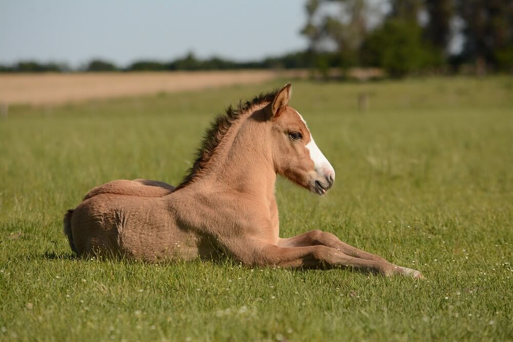 foal care from birth to 30 days