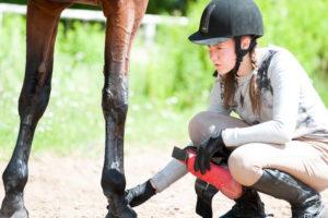 horse first aid kit checklist