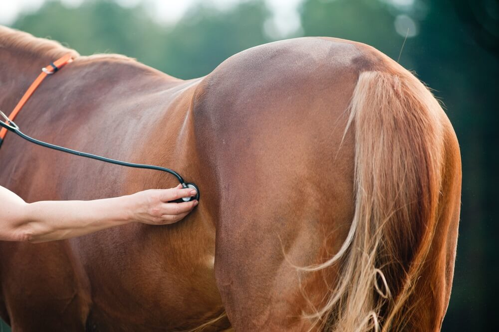 How can you treat diarrhea in horses
