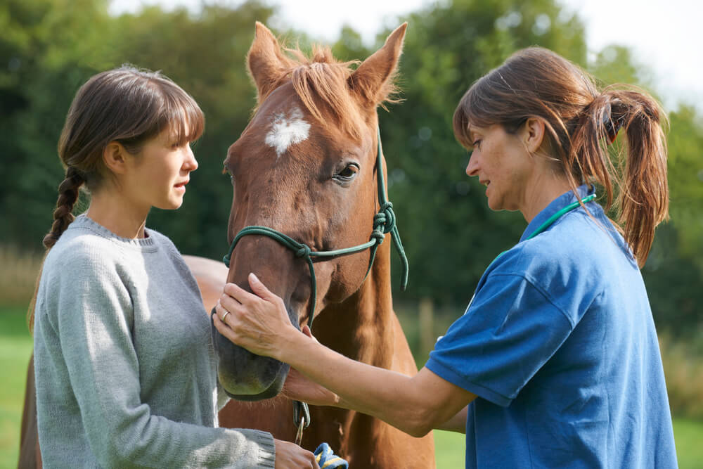 how does a vet diagnose equine coughing
