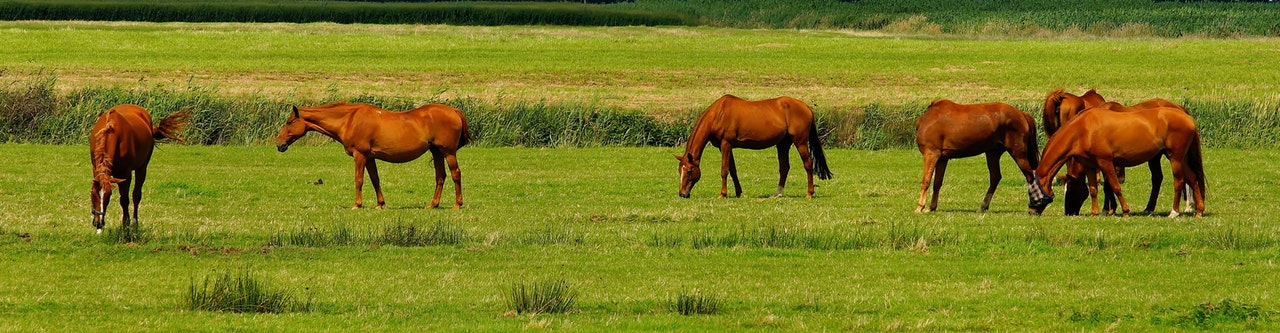 what horse breed is best for me quiz