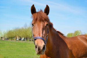 first time horse owner checklist