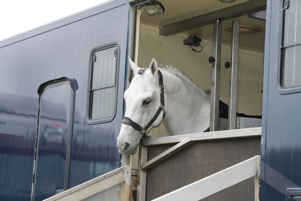 teaching your horse to trailer