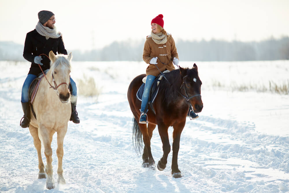 What Breed of Horse Is Best For Trail Riding