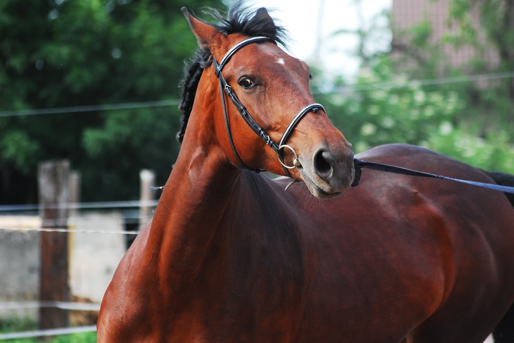 how to teach a horse to neck rein