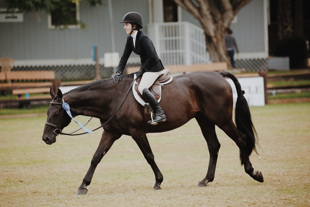 How Should You Progress with dressage pyramid