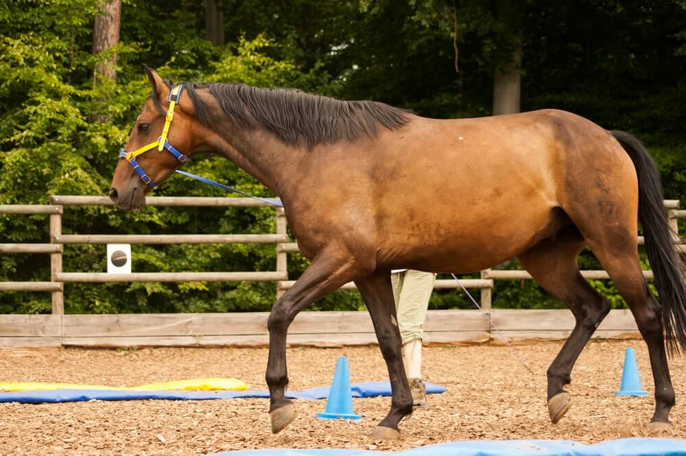 ground exercises for horses to build muscle