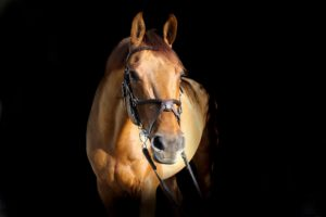 ground exercises for horses with sore backs
