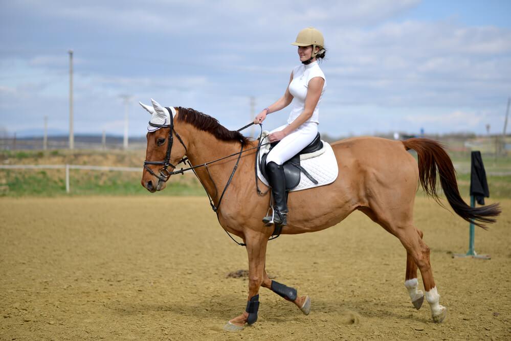 best horse riding bra reviews