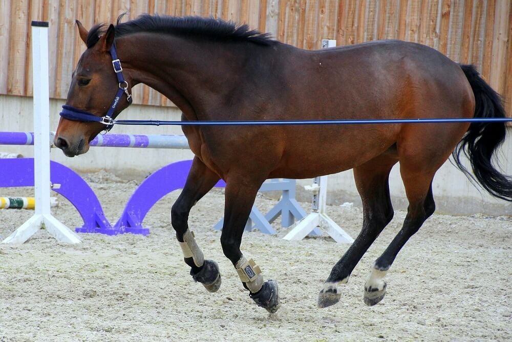 best lunge line for horses