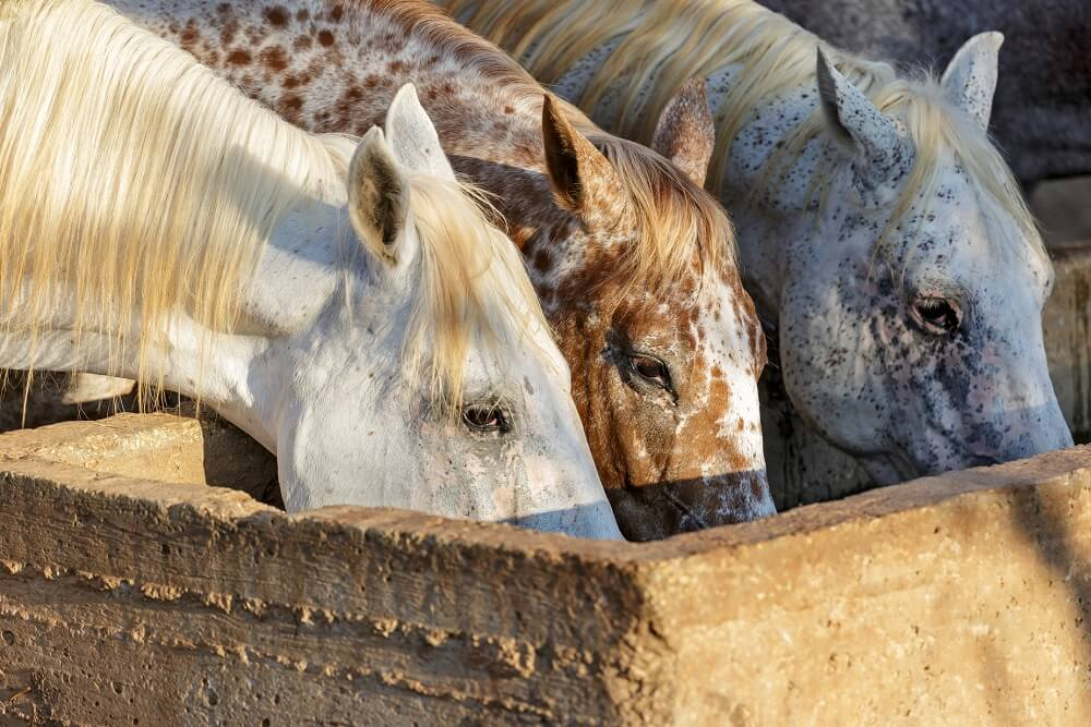 how to keep horse water trough clean