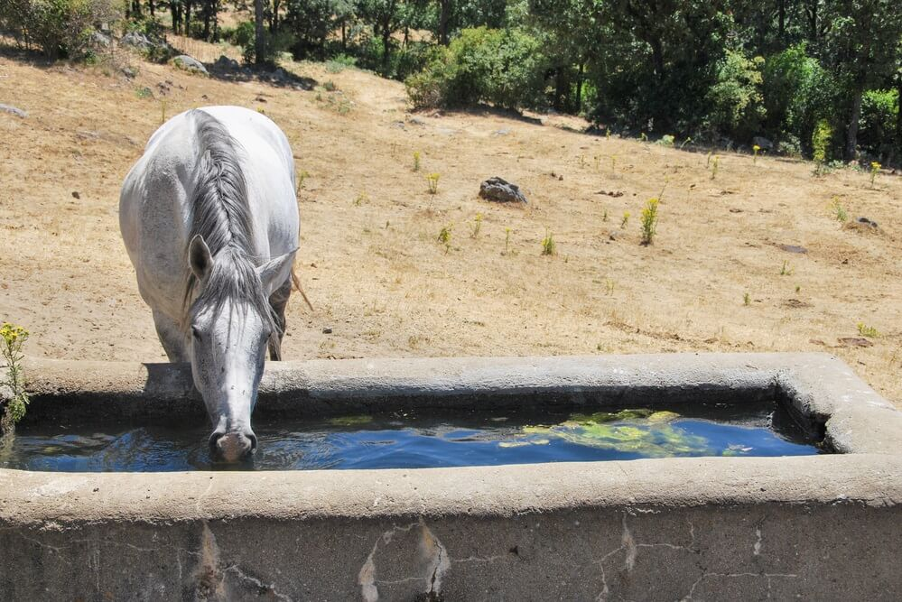 how often should a horse's water trough be cleaned