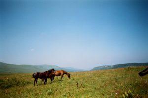 pasture management for horses