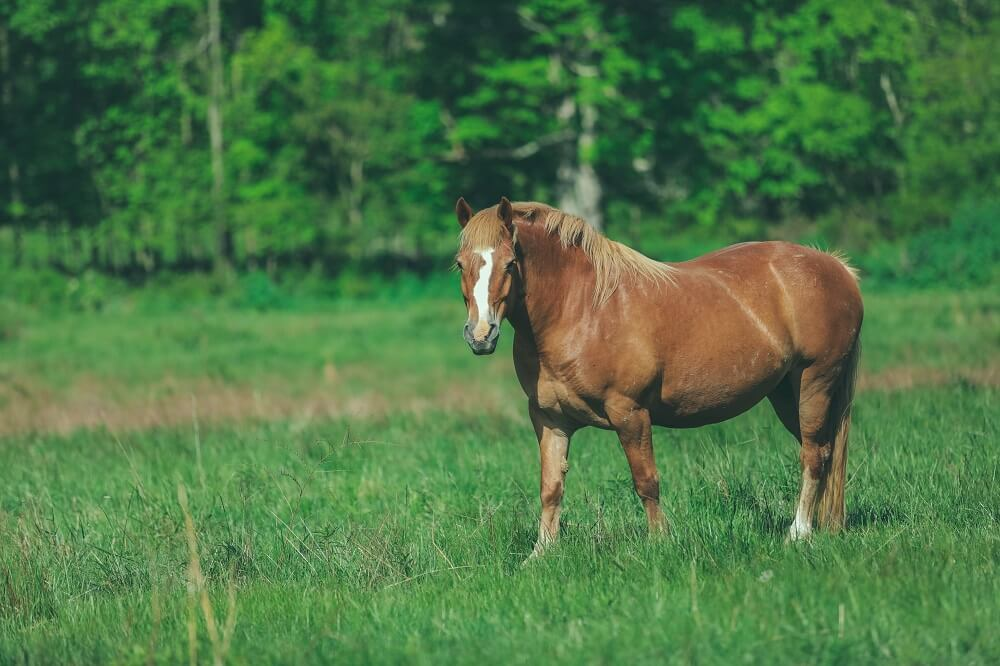what can you do to prevent fleas on horses