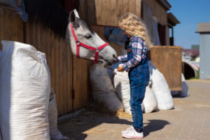 what can happen to a horse who eats chicken feed
