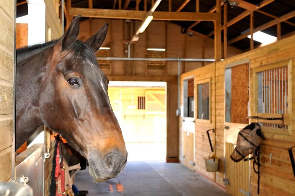 best fans for horse stalls