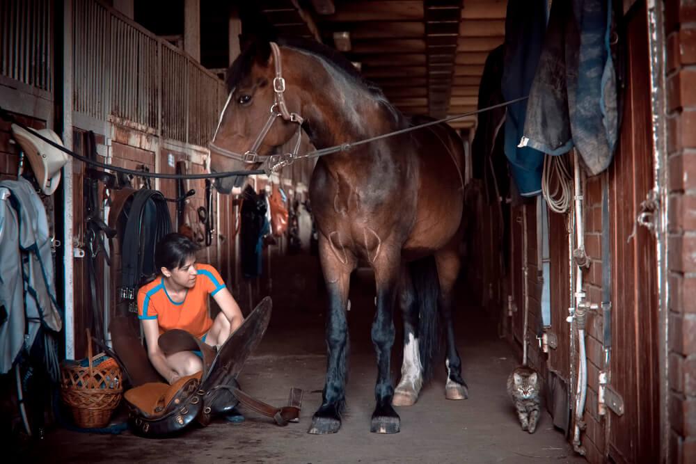 best horse vacuum