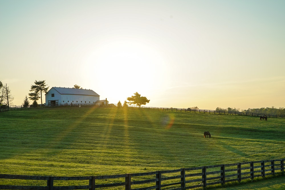 Provide pasture care and weed removal