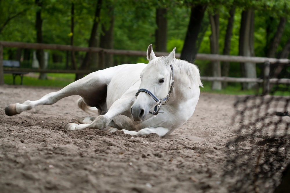 What are the symptoms of equine diarrhea