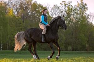 Horse Gait Definitions