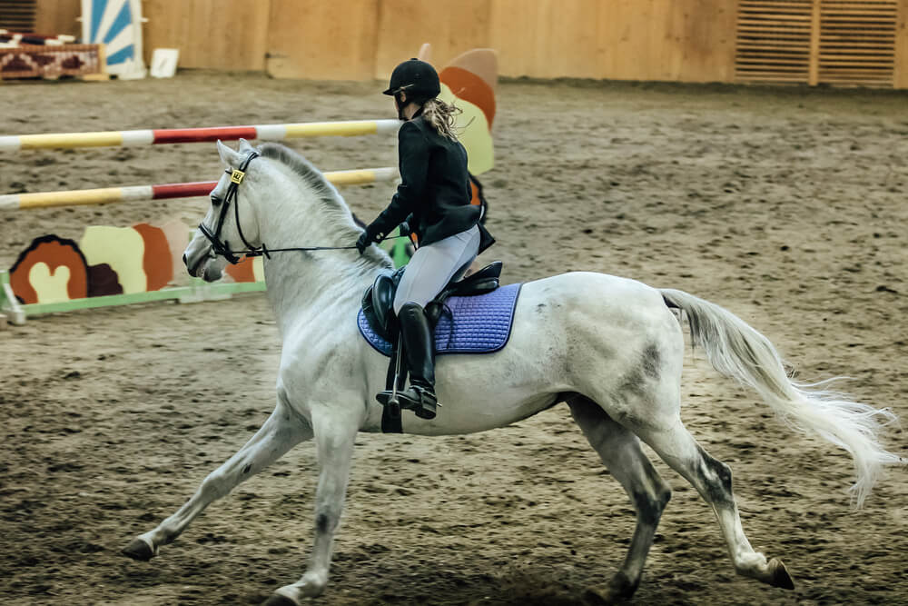 Considerations When Choosing An Equestrian Discipline