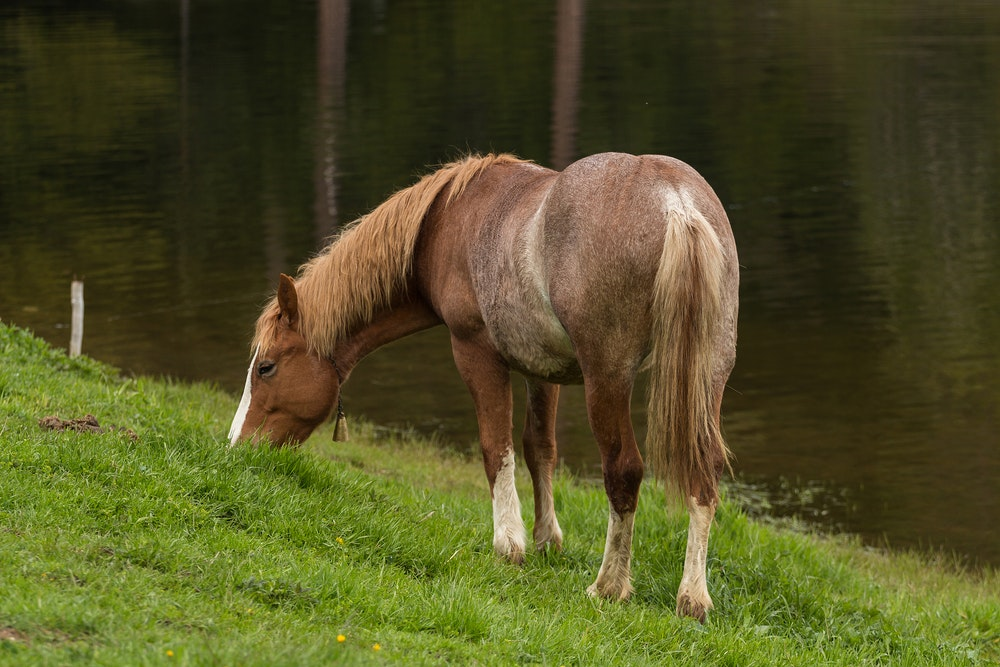 what to do if your horse is afraid of water