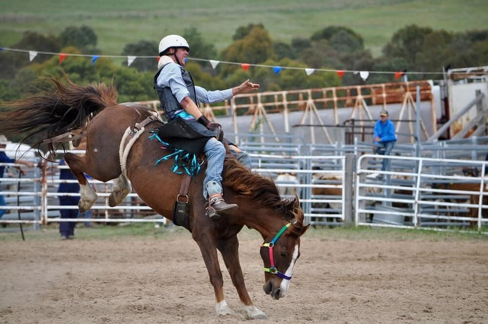 Habitual Bucking Horse