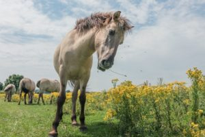horse expressions and what they mean