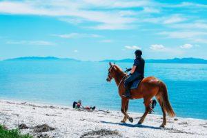 horse gaits explained