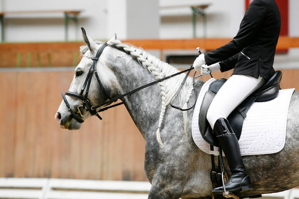 what equestrian discipline suits you