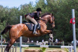 how to choose an equestrian discipline