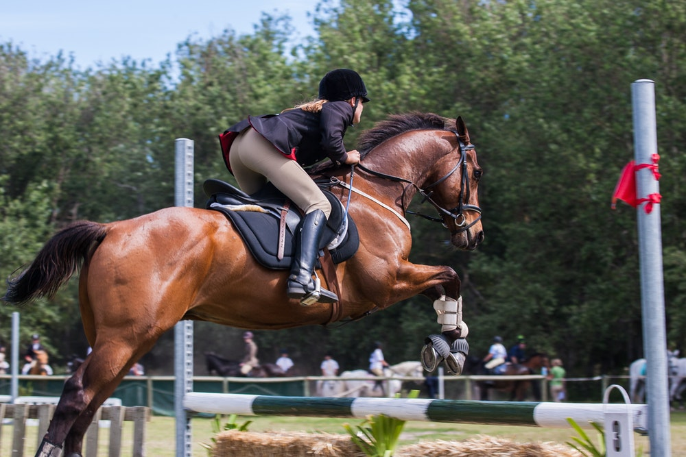 how to choose an equestrian discipline