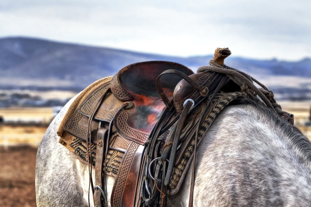best horse saddle