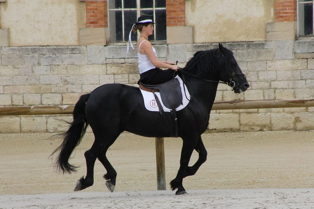 Merens Horse