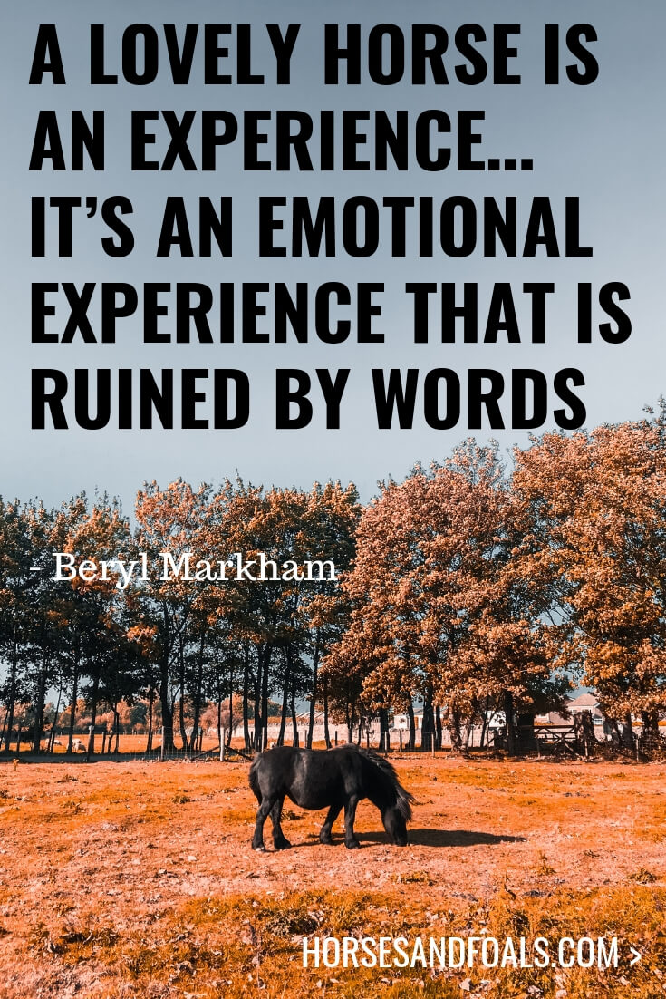 A lovely horse is an experience… It's an emotional experience that is ruined by words.