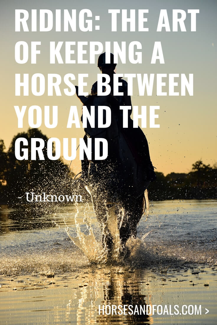 Riding: The art of keeping a horse between you and the ground