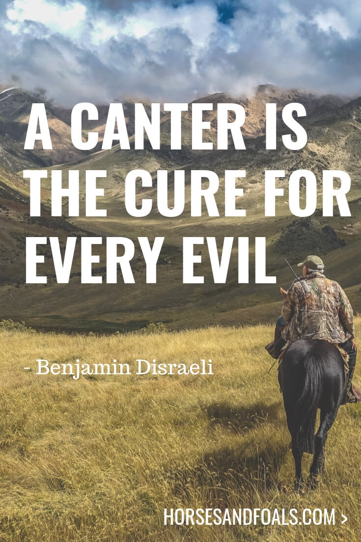 A canter is the cure for every evil -