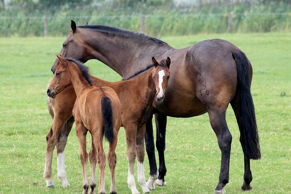 equine breeding management